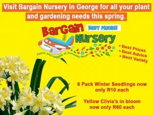 Spring Specials at the Bargain Nursery in George