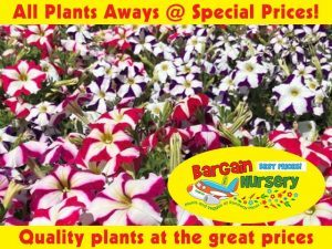 Quality Plants at Great Prices in George